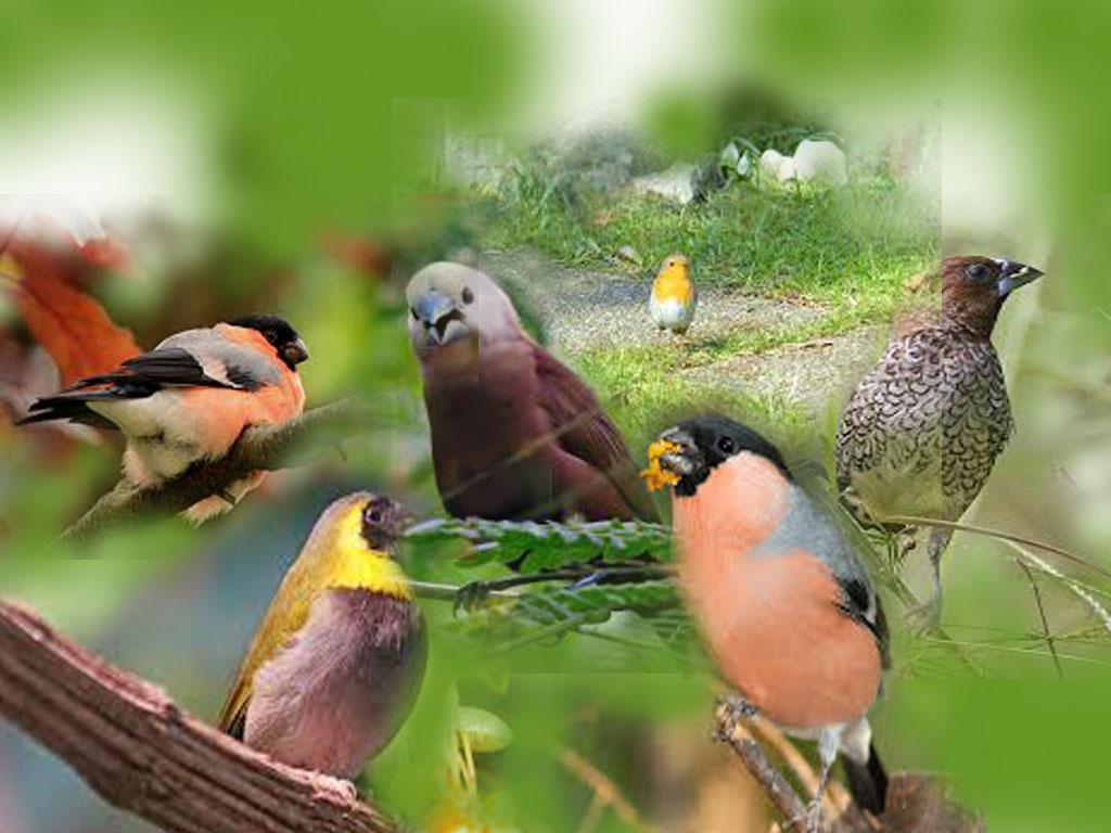 770+ Foto Gambar Burung Emprit Kaji HD  Gratis