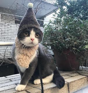 gato con gorro de lana muy simpático