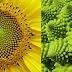Dios, el diseñador anónimo: plantas geométricas