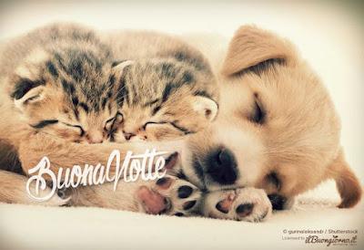 Immagini buonanotte con gatti for Buongiorno con gattini