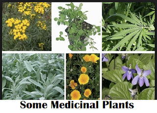 Some Medicinal Plants and How to Use Them