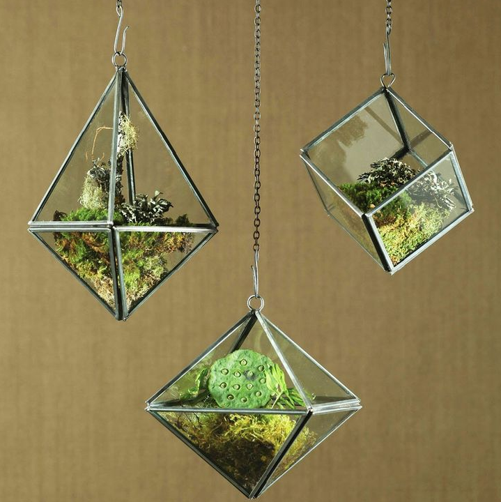 http://www.dotandbo.com/collections/weekender-desert-oasis/plant-and-grow-geometric-ceiling-terrarium-cube?source=Pinterest&medium=strlk&campaign=pinid_00303&lb=force