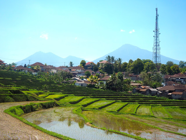 Rice terraces in central Bali, Indonesia