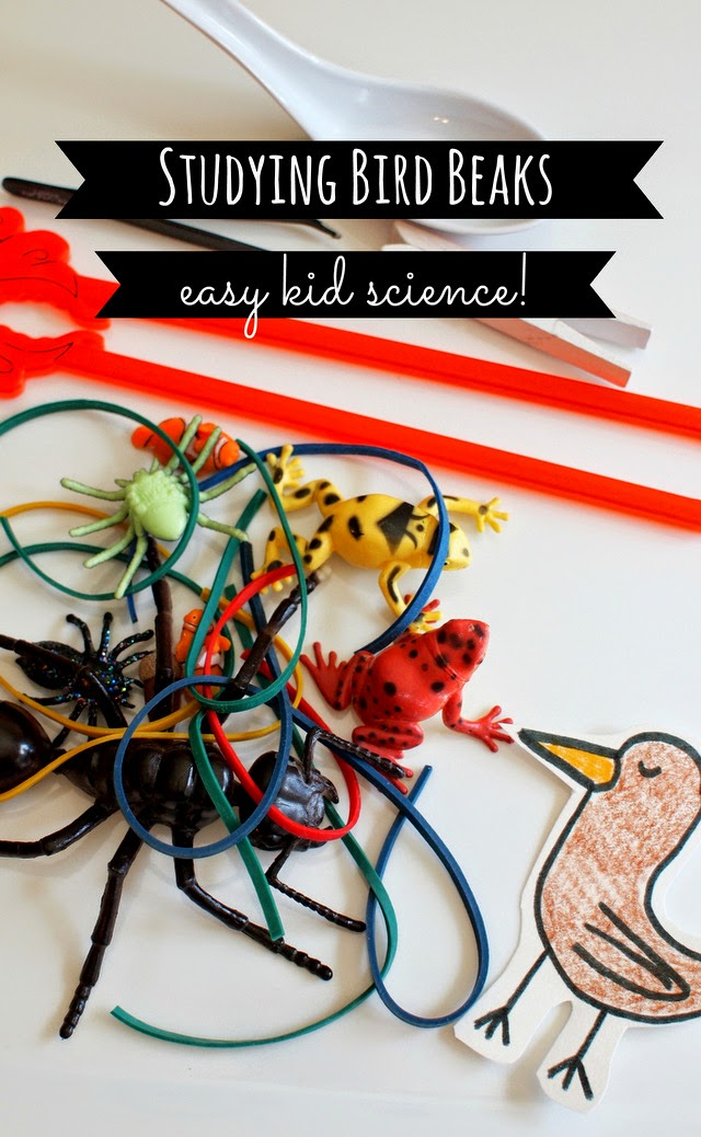 kid science:  studying bird beaks - great nature and spring activity to do with younger kids!