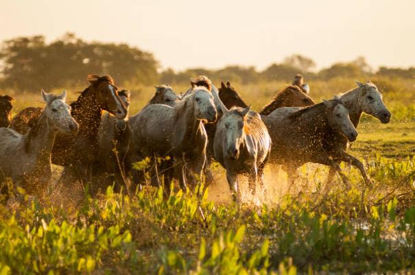 imagem de equinos correndo