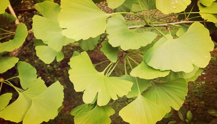 Plantas sin floracion