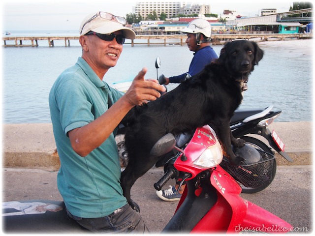 Dog on motorbike in Hua Hin Thailand