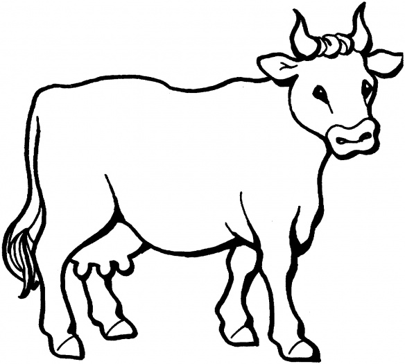 Farm Animal Cattle Cow Coloring Sheet