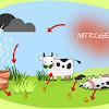 Siklus Daur Nitrogen : Tahapan, Proses, dan Contoh Ilustrasinya