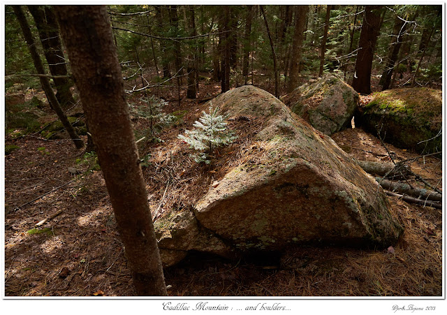 Cadillac Mountain: ... and boulders...