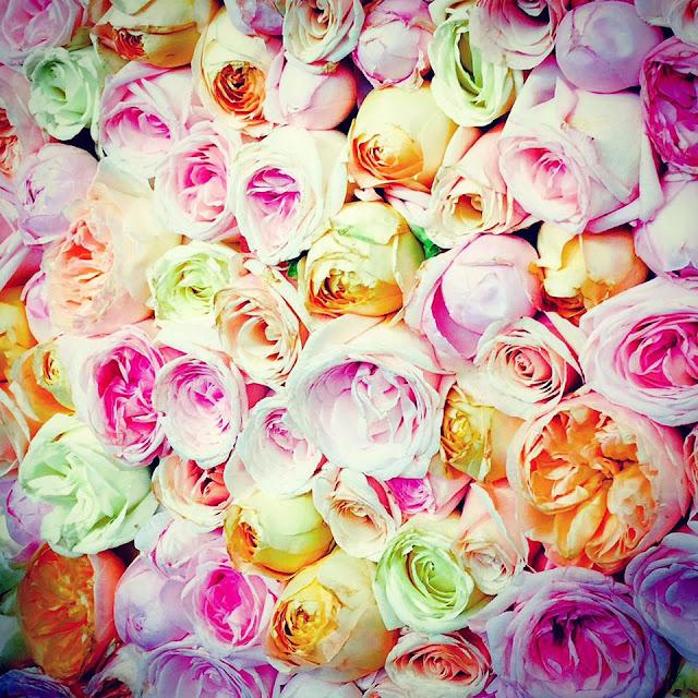 Roses Chelsea flower show