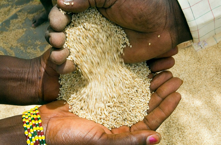Sesame seeds were one of the first crops processed for oil.