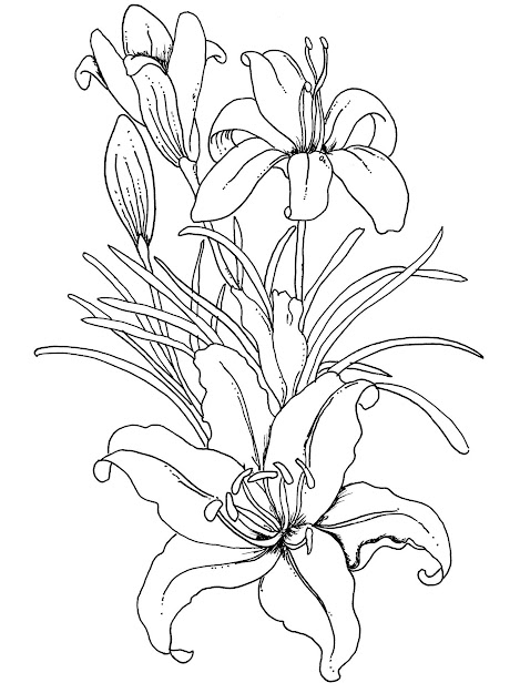 Free Printable Coloring Pages Swear Words Adult Coloring Pages Flowers  Prints And Colors