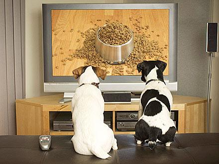 cachorros y tecnologia dog pet perro shurkonrad tv