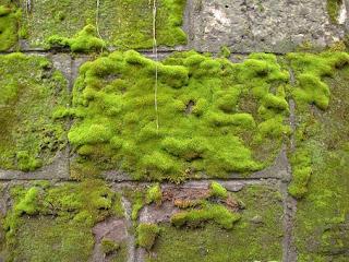 moss-457387__340.jpg
