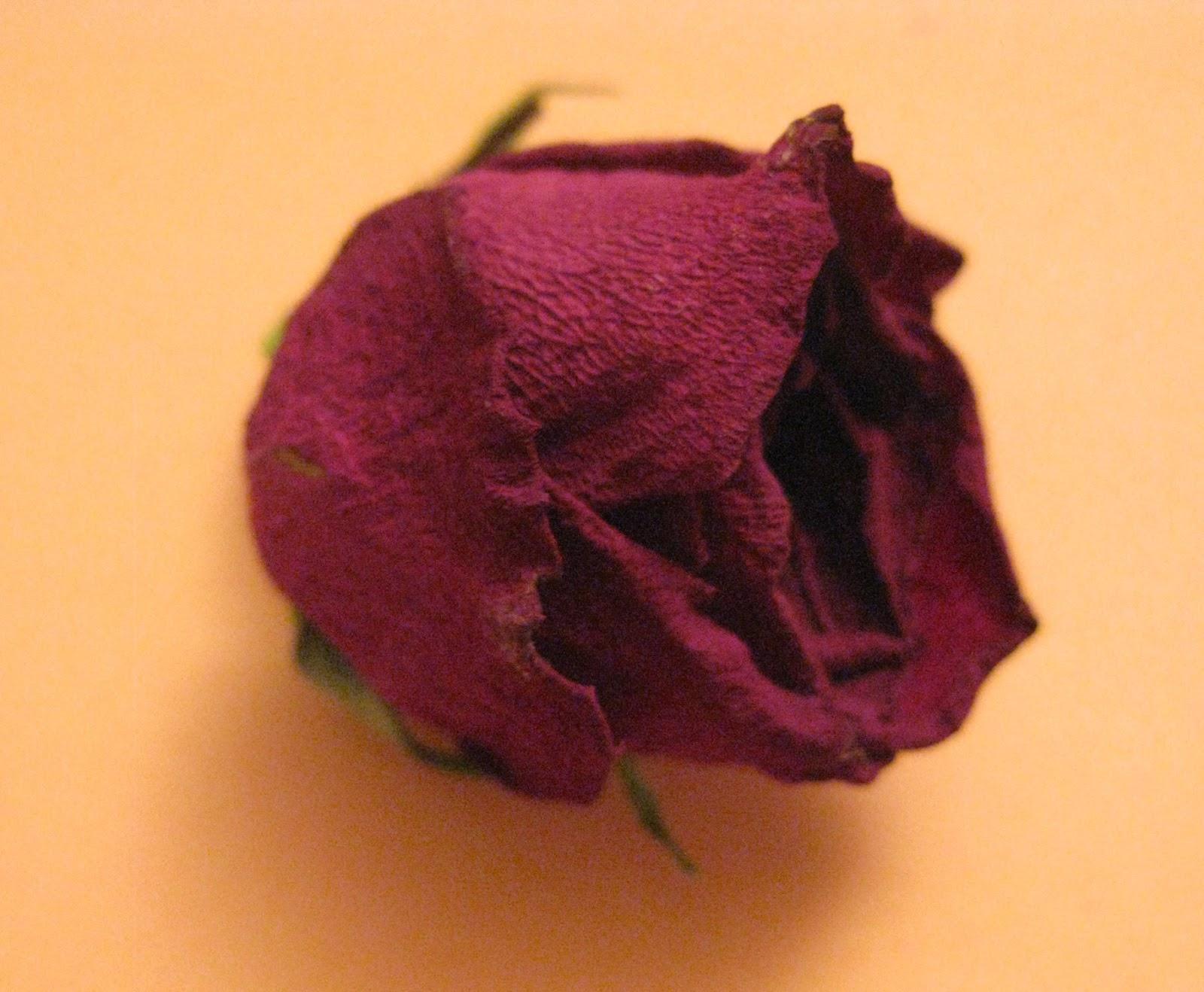 De m re fille badinage et cr ations d tes le avec des - Faire secher des roses ...