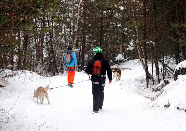 Haute-Provence, sleehonden, sneeuwhonden, huskies, Vallée de l'Ubaye, wintersport in de Haute-Provence