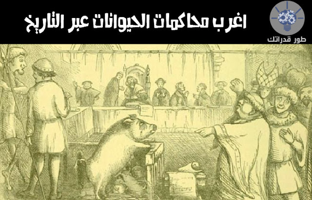 اغرب محاكمات الحيوانات عبر التاريخ