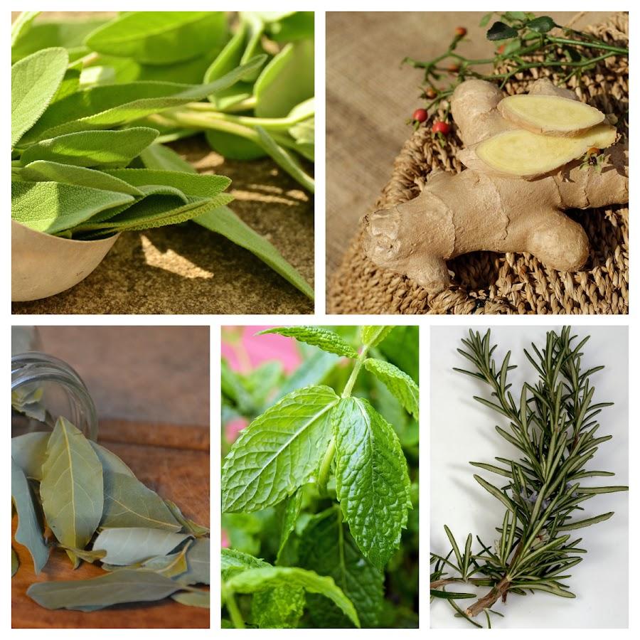 Plantas para disminuir los triglicéridos