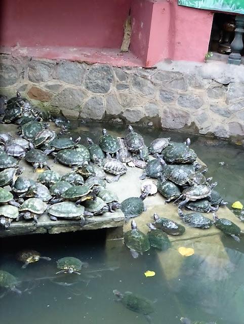 Tortugas en la Pagoda del Emperador de Jade