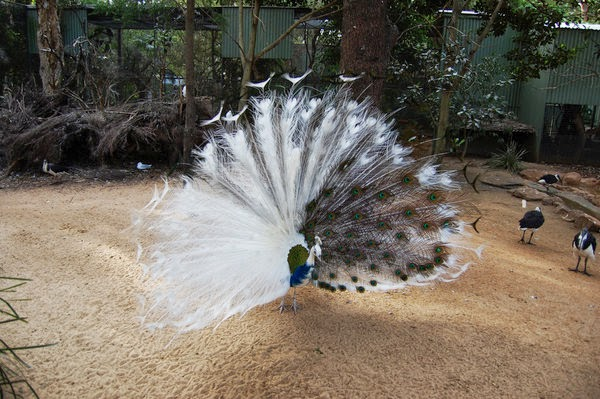 Chidinma Inspirations: Mind Blowing Half-Albino Animals