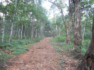 Forest Land In Pathanamthitta District