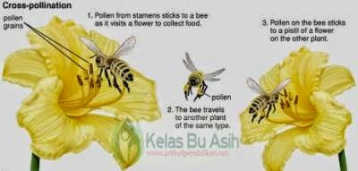 Pictures How Insects play a role in the pollination of flowering plants