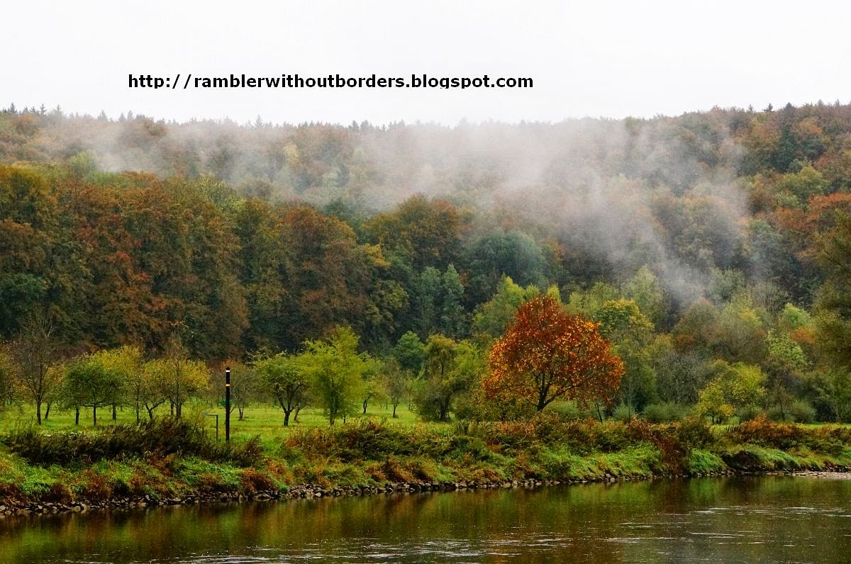 Misty forest, Danube Gorge, Germany