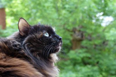 chat qui médite