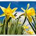 Lirón: nuestra flor por excelencia.