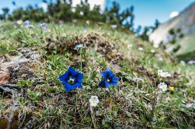 Enzian Foto Naturschutz
