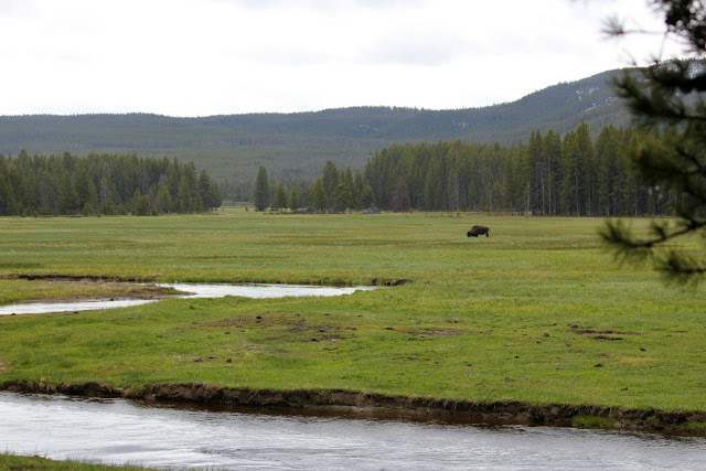 Yellowstone, bison, work hard, http://bec4-beyondthepicketfence.blogspot.com/2016/05/work-hard-play-hard.html