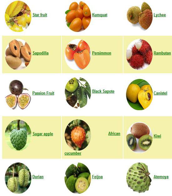 Asian Fruit List - Mature Milf