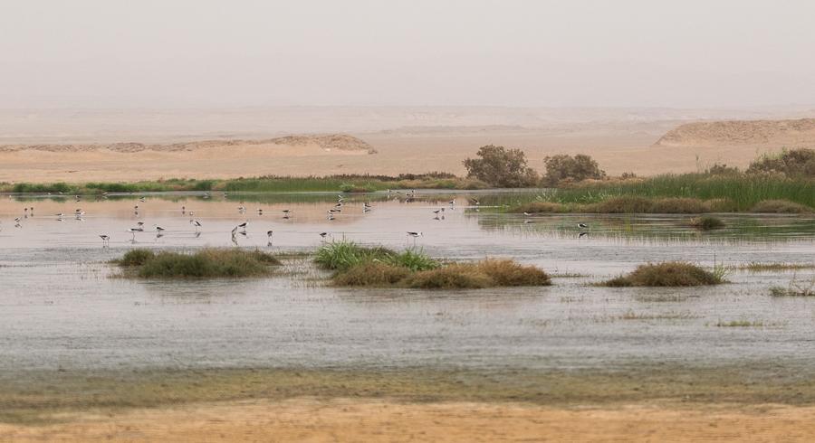 Tabuk Wetland