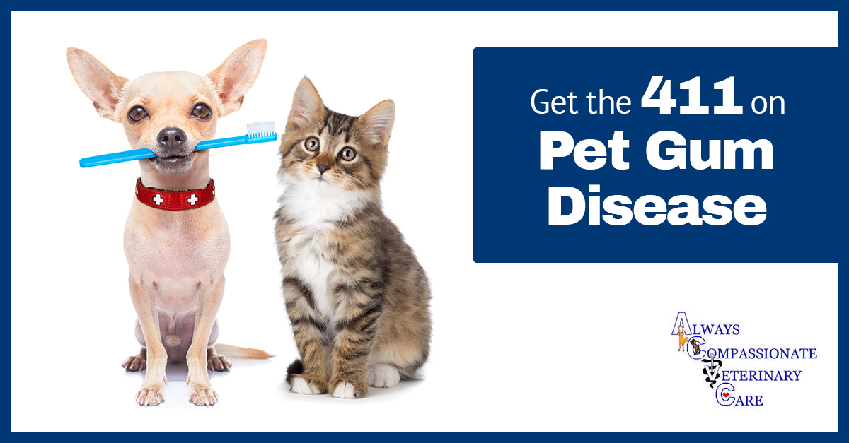 Common Illnesses In Dogs And Cats