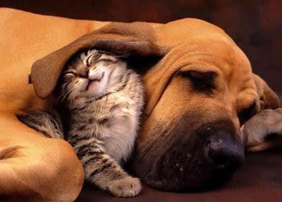 Cute pets Love