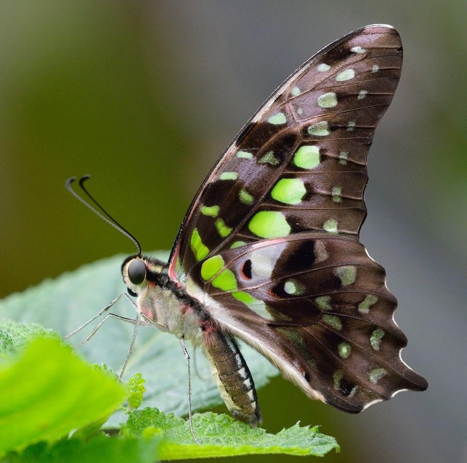 Blok888: Top 10 Most Beautiful Butterflies in the world  Blok888: Top 10...