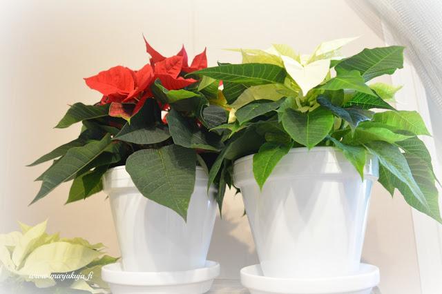 joulutahti valkoiset ruukut