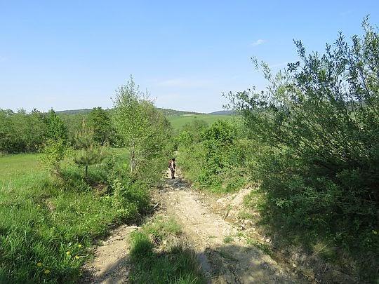 Droga między łąkami należącymi do wsi Banica.