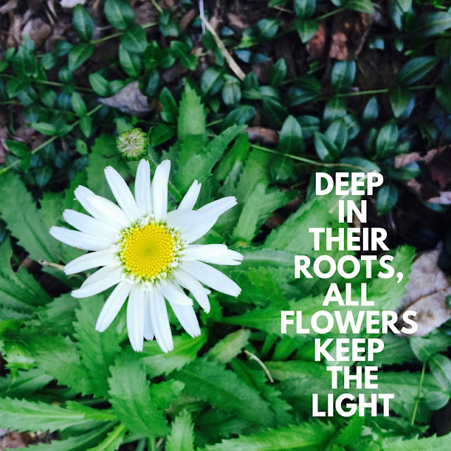#sunday #photos #nature #quotes #words #roots #flowers