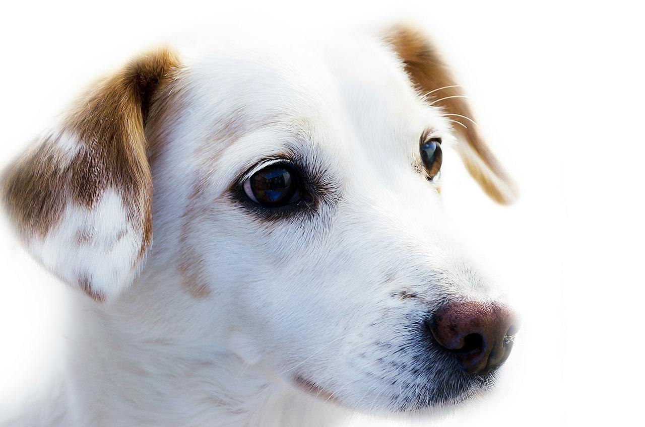 Formalności przy adopcji zwierzaka