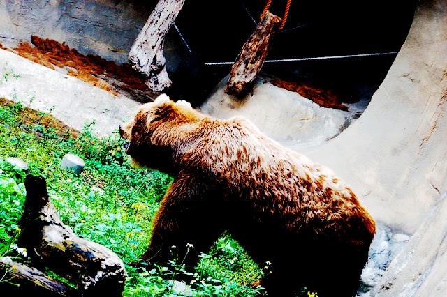 bowdywanders.com Singapore Travel Blog Philippines Photo :: Taiwan :: Visit this Gargantuan Animal Place in Asia: The Taipei Zoo, Taiwan