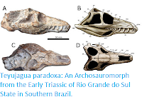 https://sciencythoughts.blogspot.com/2016/03/teyujagua-paradoxa-archosauromorph-from.html