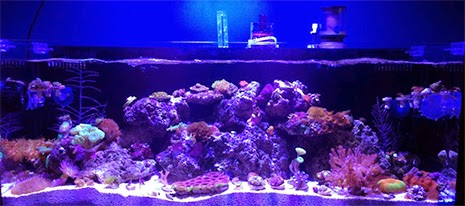 11 Inspirational Innovative Marine Nuvo Aquariums Marine