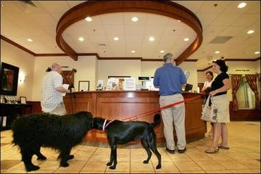 hotéis que aceitam cães