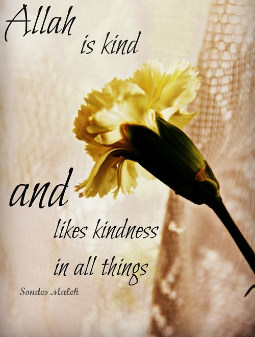 Allah is kind and likes kindness