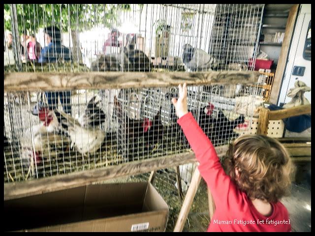 Choisir ses poules