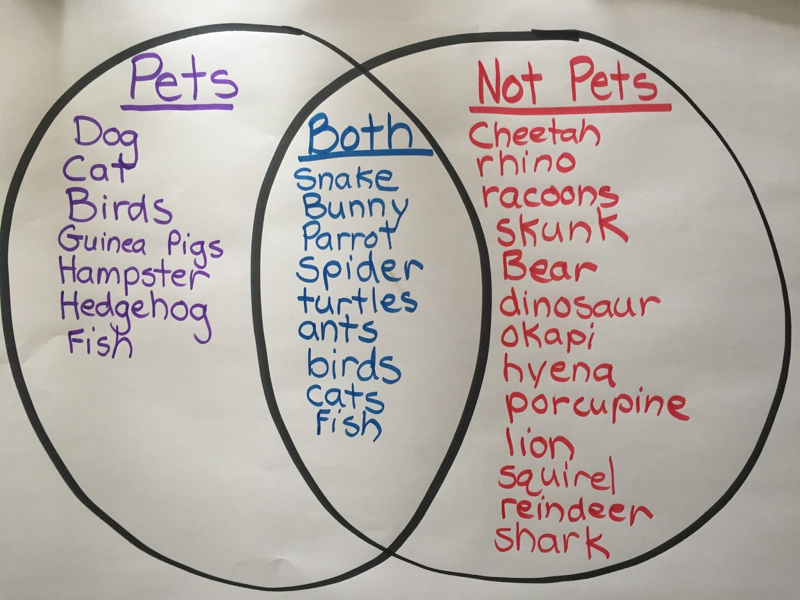 hight resolution of once we figured out what could be a pet the kids picked a pet to become an expert in we had experts in cats dogs guinea pigs bunnies turtles snakes