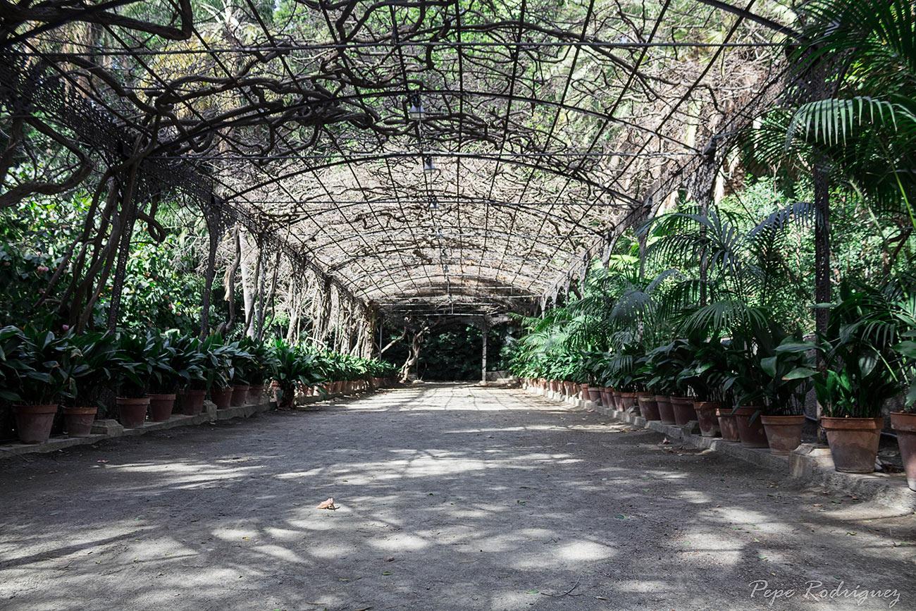 Jard n bot nico la concepci n mis fotos de m laga for Jardin botanico de malaga