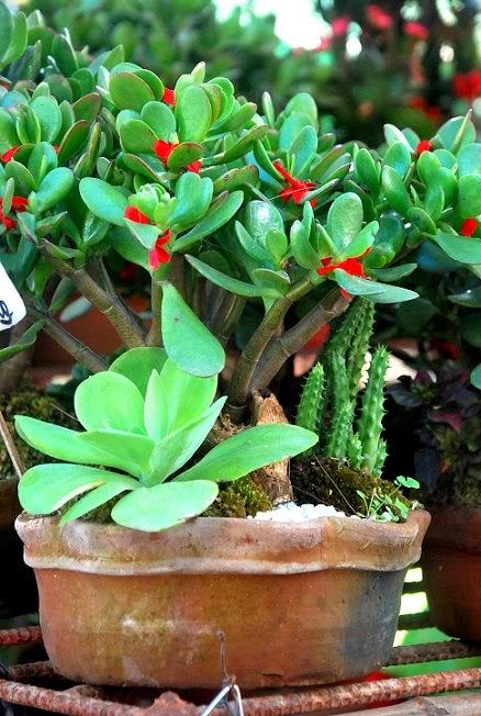 Jasmine Flower Indoor